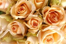 Free Rose Royalty Free Stock Images - 7733829