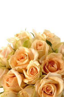 Free Rose Royalty Free Stock Photos - 7733848