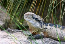 Free Eastern Water Dragon Stock Photography - 7734242