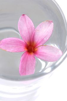 Free Flowers In Water Royalty Free Stock Photo - 7734255