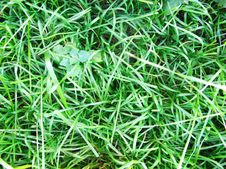 Free Grass Background Royalty Free Stock Photos - 7735718