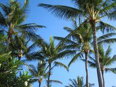 Palm Trees Of Kauai Stock Images
