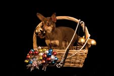 Toy Terrier Dog In The Decorated Basket Royalty Free Stock Images