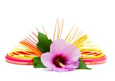 Free Childrens Toy And Flower Royalty Free Stock Photography - 7737517