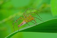 Lynx Spider In The Park Stock Images