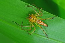 Lynx Spider In The Park Stock Photos