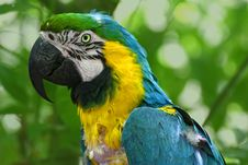 Free Parrot Royalty Free Stock Image - 7738776