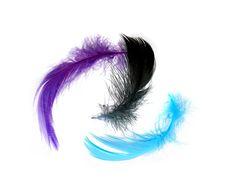 Free Feathers On White Royalty Free Stock Photo - 7738905
