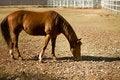 Free Beautiful Horse Stock Photo - 7744870