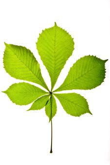 Free Green Leaf Stock Photos - 7740183