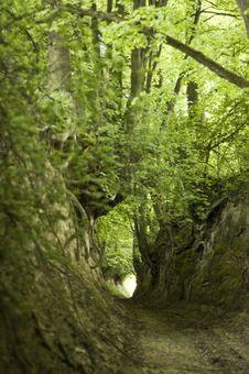 Free Green  Ravine Stock Photo - 7740550