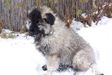 Free Portrait Of Dog Stock Photo - 7740830