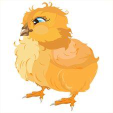 Yellow Chicken Stock Image