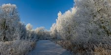 Free Winter Panorama Royalty Free Stock Photos - 7742998
