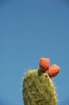 Prickly Pear Fruits Royalty Free Stock Photo