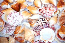 Free The Cloorful Shells Stock Images - 7743594