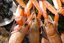 Free Fresh Seafood Royalty Free Stock Photo - 7745105