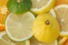 Sliced Citrus Fruits Royalty Free Stock Photography