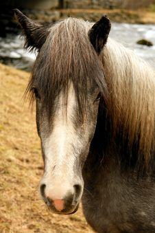 Free Nordic Horse Stock Photo - 7745900