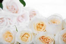 Free White Roses With Yellow Centers Royalty Free Stock Photography - 7746347