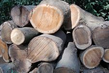 Free Wood Stock Photos - 7746553