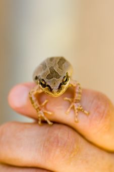 Free Frog On Finger Royalty Free Stock Photo - 7747815