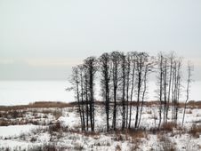 Free Winter Trees Royalty Free Stock Photography - 7749087