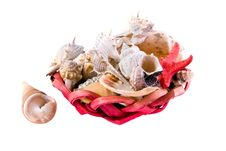 Free Sea Shells Stock Photography - 7749242