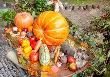 Free New Harvest, Vegetables Stock Photos - 77446223