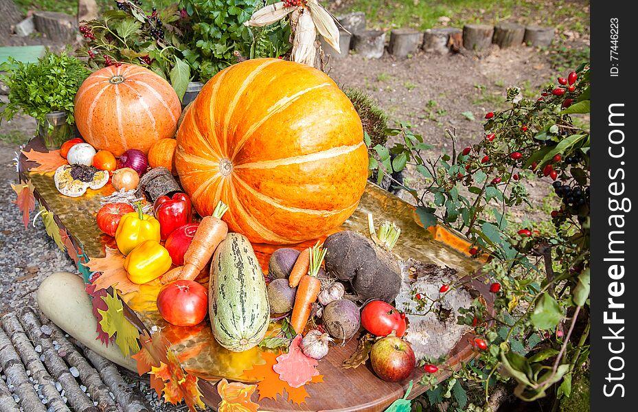 New harvest, vegetables
