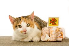 Spotted Cat And Gift Box, Isolated Royalty Free Stock Image