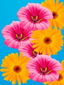 Free Flowers With Water Drops Stock Image - 7750891