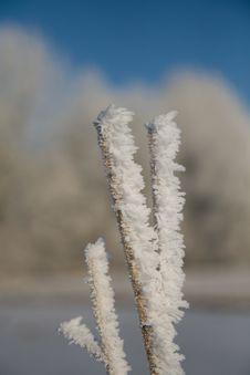 Free Frozen Cane Stock Image - 7750931