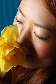 Free Yellow Rose Stock Photos - 7751403