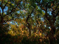 Free Mediterranean Forest Royalty Free Stock Photos - 7751508