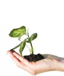 Free Hand Holding A Gren Plant Royalty Free Stock Images - 7751649