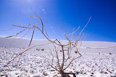 Free White Sand Desert Royalty Free Stock Images - 7752349