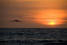 Free Pelikan Sunset Stock Photography - 7752722