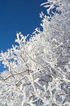 Free Twigs Covered With Hoarfrost Stock Image - 7753471