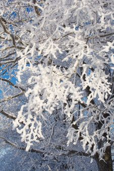 Free Twigs Covered With Snow Stock Photos - 7753493