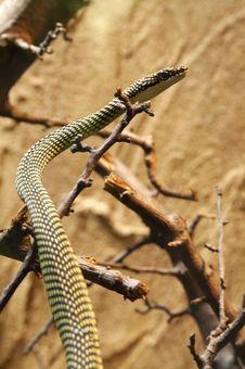 Free A Snake Stock Photos - 7754283