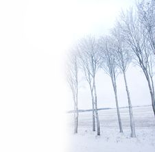 Free Frozen Trees Stock Photos - 7755333