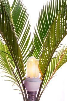 Free Natural Lamp Royalty Free Stock Photography - 7756867