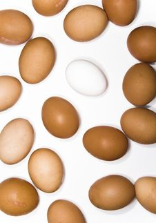 Free Eggs Stock Photos - 7758443