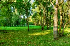 Free Morning In Forest Royalty Free Stock Photo - 7758805