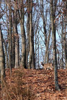 Free Deer Stock Image - 7759011