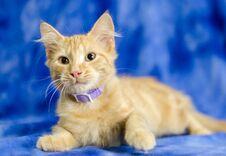 Free Orange Tabby Kitten Stock Image - 77567541