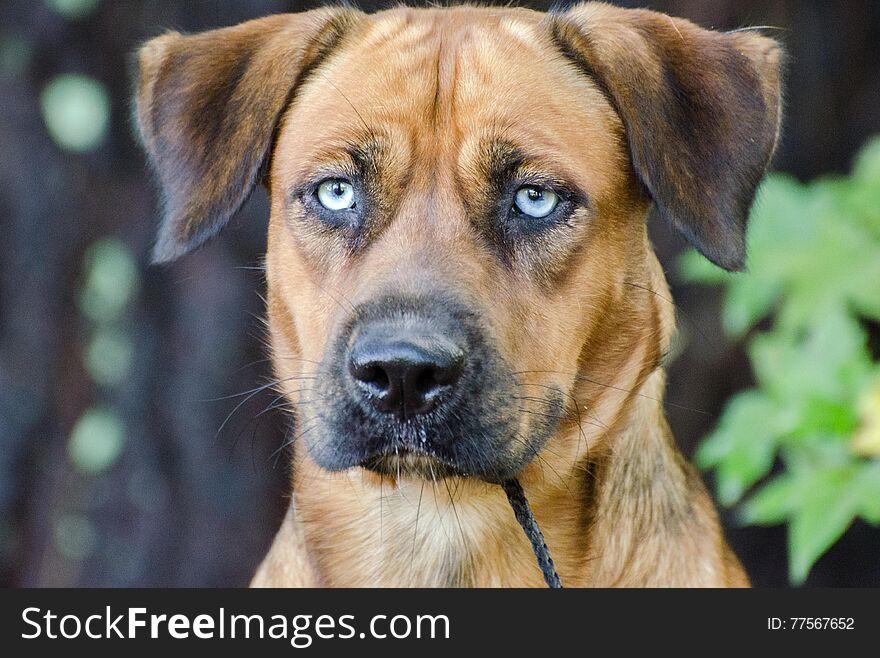 Husky Hound Outdoor Adoption Photo