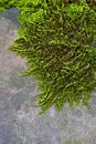 Free Moss And Wall Royalty Free Stock Photography - 7764017