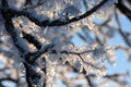 Free Frozen Branches Royalty Free Stock Photo - 7764715